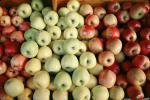 Apples, texture, background, FGNV02P11_05