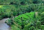 Rice Terrace, Terraced Hills, River, Island of Bali