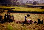 Woman, Women, Labor, Laborers, Harvesting, Kathmandu Valley, FMAV01P11_01.0946