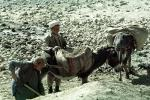 Donkey, Dirt, Afghanistan, Shanghai Shi, China, Chinese, Asian, Asia
