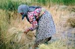 Woman, Harvesting Wheat, Turkey, FMAV02P08_03