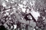 Picking Cotton, manual labor, worker, FMBV01P05_14