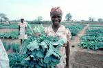 Woman with her Harvest, Smiles, FMJV01P04_13
