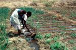 Cutting an irrigation ditch, Mother Farming with Child on her Back, near Tete, Mozambique, FMJV01P05_12