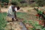 Cutting an irrigation ditch, Mother Farming with Child on her Back, near Tete, Mozambique, FMJV01P05_15