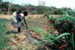Cutting an irrigation ditch, Mother Farming with Child on her Back, near Tete, Mozambique, FMJV01P05_16