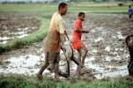 Plow, Plowing, man, male, farmer, manual labor, mud, muddy, near Andrapa, Madagascar