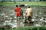 Plow, Plowing, man, male, farmer, manual labor, oxen, mud, muddy, near Andrapa, Madagascar
