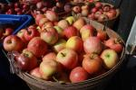 Buckets of Apples, Two-Rock, Sonoma County, FMND02_026