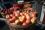 Buckets of Apples, Two-Rock, Sonoma County, FMND02_028