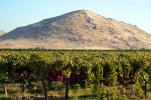 Orchard, Jesse Morrow Mountain, Navelencia, Fresno County, San Joaquin Valley, FMND04_132