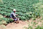 Migrant Farm Worker
