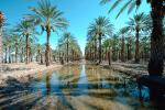 Palm Dates, water, irrigation, trees, desert, Coachella, California