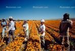 migrant farm workers, Fields