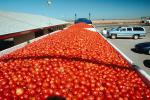 Tomato filled trailers, cars, FMNV03P05_09.0839
