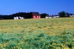 Yellow Flowers, barn, outdoors, outside, exterior, rural, building, architecture, silo