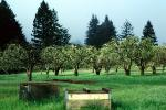 Gravenstein Apples, Occidental, California, bee pollinators, FMNV06P05_05