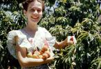 Woman Picks Peaches, Tree, Orchard, 1940s