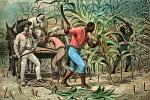Sugar Cane, White Racist, Slave Trade, Slave owner, southern USA, Domination, Cruel, Southern Hospitality, Oppression, Racism, Racist, slave, slavery, FMNV08P12_18B