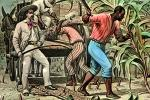 Sugar Cane, White Racist, Slave Trade, Slave owner, southern USA, Domination, Cruel, Southern Hospitality, whip, Christian, deep south, FMNV08P12_18C