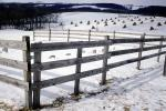 Fence in the Snow, Bundles of Hay, FMNV08P14_14