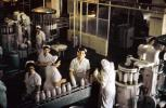 Bottling Plant, Dairy, women, workers, uniforms, FPDV01P02_17