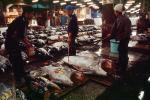 bringing in Tuna for auction at the Tsukiji Fish Market, Tokyo, FPOV01P04_02