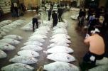 bringing in Tuna for auction at the Tsukiji Fish Market, Tokyo