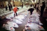 bringing in Tuna for auction at the Tsukiji Fish Market, Tokyo, FPOV01P10_19