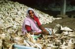 Woman, Sari, Shucking Corn, Gujarat, India