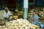 Shucking Corn, Gujarat, India