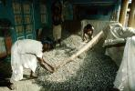 Threshing Grain, Gujarat, India