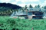 Palm Trees, grass, building, smoke, Samoa