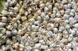 Popcorn Texture, background, sweets, sugar, glucose, unhealthy, confection, tasty