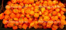 Bell Pepper, texture, background, FTFD01_002