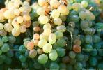 Grapes, texture, background