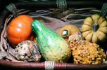 gourds, squash, texture, background, FTFV01P13_08