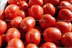 Tomatoes, texture, background, FTFV01P15_12