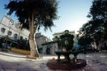 Town, Water Fountain, aquatics, buildings, tree, Algiers, Algeria, FWPV01P06_17
