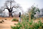 Woman Carrying a Bucket of Water, Baobab Tree, Path, Dirt, soil, Adansonia, FWWV01P09_03