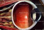 Lens, Cornea, Cross section, Eyeball, iris, pupil, veins, Round, Circular, Circle, Sclera, HAEV01P03_12B