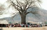 Well Baby Clinic, Baobab Tree, Adansonia, Rushinga