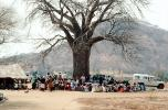 Well Baby Clinic, Baobab Tree, Adansonia, Rushinga, HOFV01P04_03