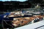 Log Rafts, Lumber Mill, Humboldt County