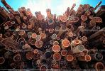 Logs, stacked, stacks, pile, Mendocino County, California