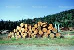 evergreen, conifer, log, pile, stack, IWLV01P12_07