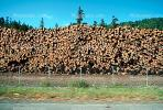 evergreen, conifer, log, pile, stack, IWLV01P12_09.2172