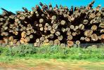 evergreen, conifer, log, pile, stack, IWLV01P12_11.2172