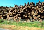 evergreen, conifer, log, pile, stack, IWLV01P12_12.2172