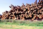 evergreen, conifer, log, pile, stack, IWLV01P12_13